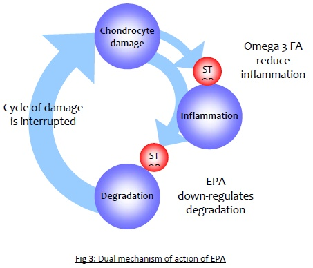 Fig 3: Dual mechanism of action of EPA