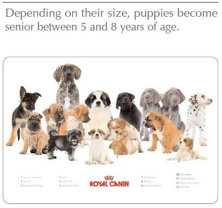 Age puppies become senior