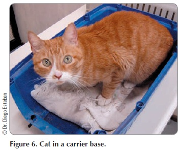 Fig 6 - Cat in a carrier