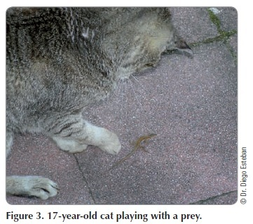Fig 3 - Cat playing with prey