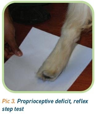 Reflex step test